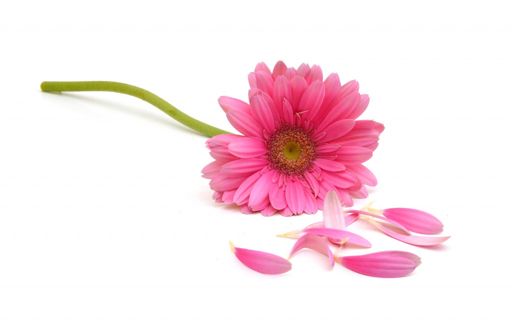 Flower missing petals