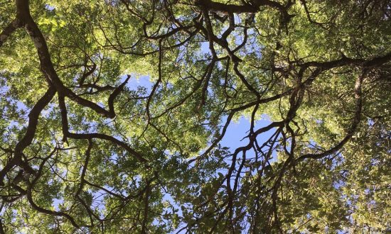 My Prayer for You This Year – Reaching Heights Unknown
